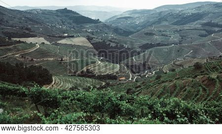 View of the vineyards are on a hills in landscape Douro Valley, Portugal.