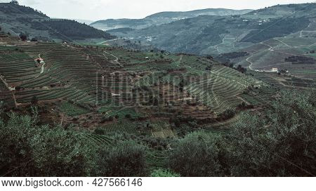 Top view of vineyards are on a hills at Douro Valley, Portugal.