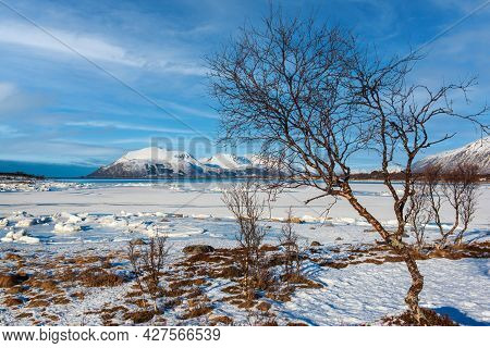 View Of Beautiful Winter Landscape With Snowy Mountains And Small Tundra Trees At Lofoten Islands In