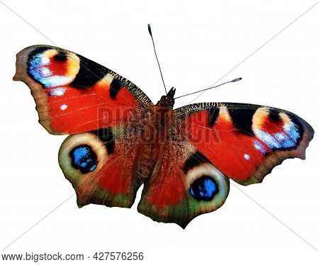 Colorful European Peacock Butterfly Isolated On White Background
