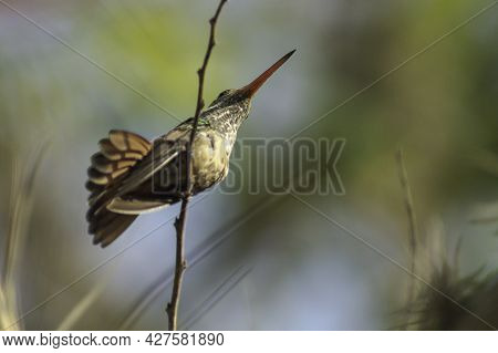 Small Hummingbird Perched On A Tree Branch Patiently Observing