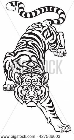 Tiger Climbing Down And Big Cat Eyes Looking Straight. Isolated Front View Image. Black And White Ta