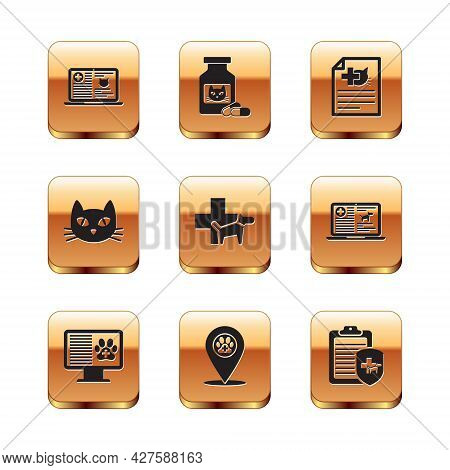 Set Clinical Record Cat On Laptop, Pet Monitor, Location Veterinary, Veterinary Clinic, Cat And Medi