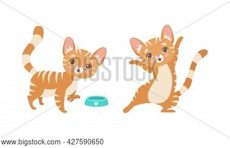 Cute Ginger Striped Kitten As Furry Domestic Pet With Feeding Bowl Vector Set