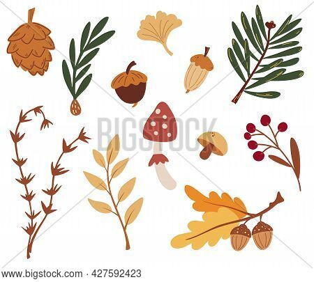 Set Of Forest Elements. Autumn Leaves, Cones, Berries, Spruce Branches And Acorns. Clipart Tiling Ob