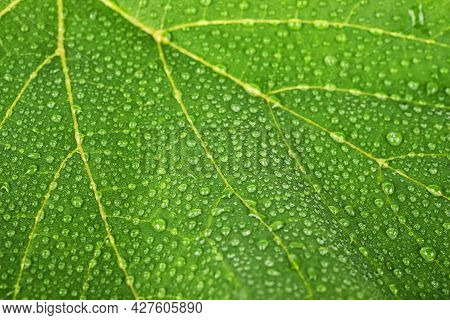 Water Drops On Green Leaves Macro Background