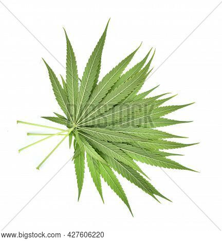 Top View Of Cannabis Leaf,marijuana Isolated On White Background