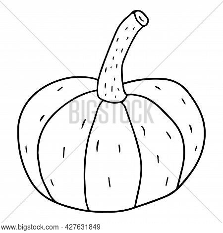 Cartoon Linear Doodle Retro Pumpkin Isolated On White Background. Harvest Icon.