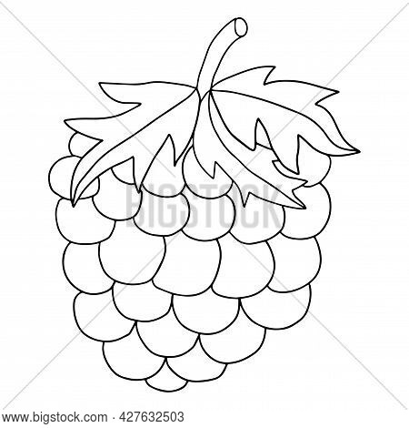 Cute Cartoon Doodle Linear Raspberry Isolated On White Background. Summer Berry, Fruit.
