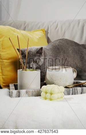 Home Decoration: A Grey Kitten Sniffing On A Candle In Concrete Form, A Mug, Bubble Candle In A Marb