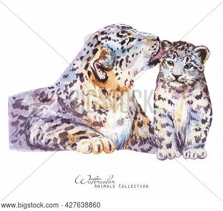 Leopard Watercolor Illustration. Snow Leopard Portrait. Mother Leopard And Cub