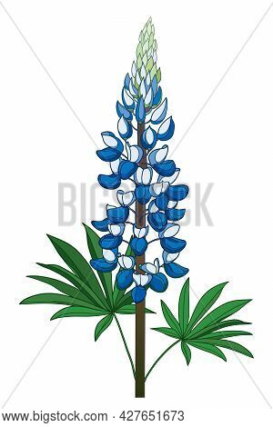 Vector Stem With Outline Blue Lupine Or Texas Bluebonnet Flower Bunch With Leaf Isolated On White Ba