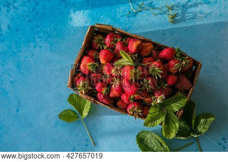Fresh Ripe Organic Strawberries In Old Basket On Pick Your Own Berry Plantation. Harvesting Fresh St