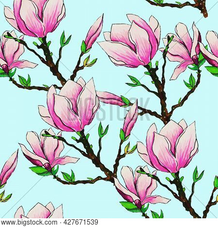 Magnolia Is A Flower Of A Tree Blooming In Spring On Pink Twigs With Delicate Petals.they Are Bloomi