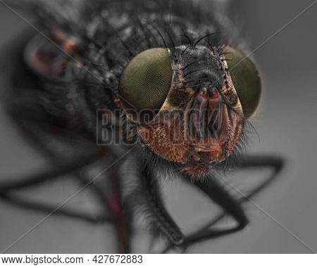 Macro Sharp And Detailed Connection Of The Surface Of A Green Fly's Eye, A Housefly Head Close-up, T