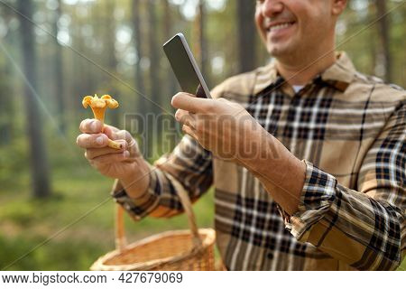 picking season and leisure people concept - close up of man with wicker basket and smartphone using app to identify mushroom in autumn forest