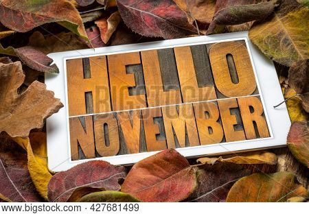 Hello November- word abstract in vintage letterpress wood type blocks on a screen of a digital tablet against dried leaves