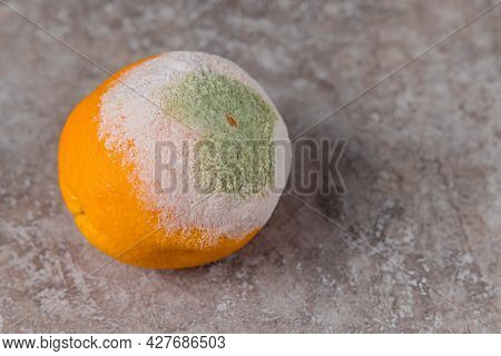 Spoiled Orange With White And Green Mold On Table.