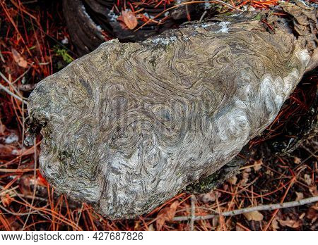 Log Designs - A Strange Design Pattern On Part Of A Log In The Woods Near Suttle Lake - Cascade Rang