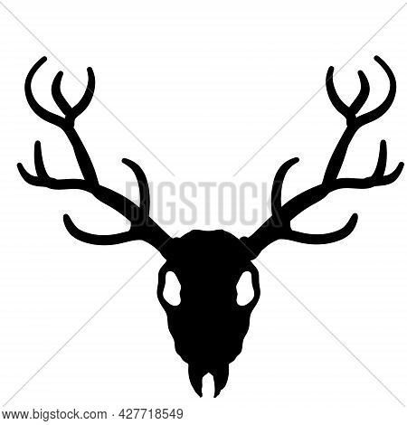 Skull Of Deer. Hunting Trophy With Horns. Antler Of Stag Or Reindeer. Scary Black And White Silhouet