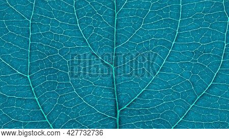 Leaf Of Fruit Tree Close-up. Turquoise Tinted Mosaic Pattern Of Veins And Plant Cells. Abstract Blue
