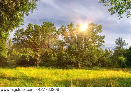 Beautiful Summer Landscape With Trees And Green Grass. Tree Foliage In Beautiful Morning Light With
