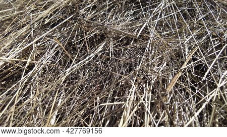 Hay Or Straw Yellow Farm Texture Background. Dried Grass Backdrop. Dry Wheat Pile.