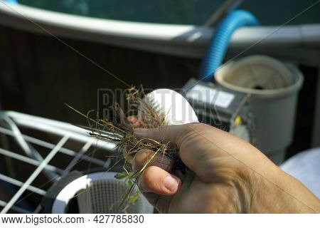 A Hand Removing Dirt Out Of Clogged Disassembled Pool Filter, Outdoor Closeup