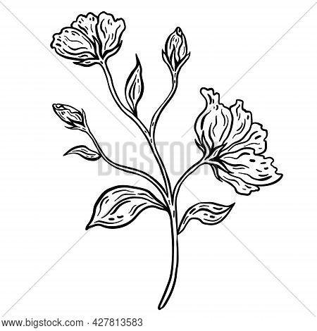 Flower Branch With Leaves. Hand Drawn Vector Illustration. Monochrome Black And White Ink Sketch. Li