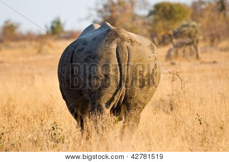Rhino standing in the bush from behind walk away poster