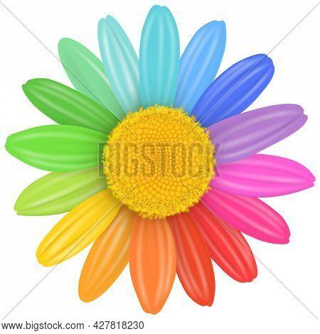 Daisy flower isolated with multicolored petals, rainbow daisy flower illustration.