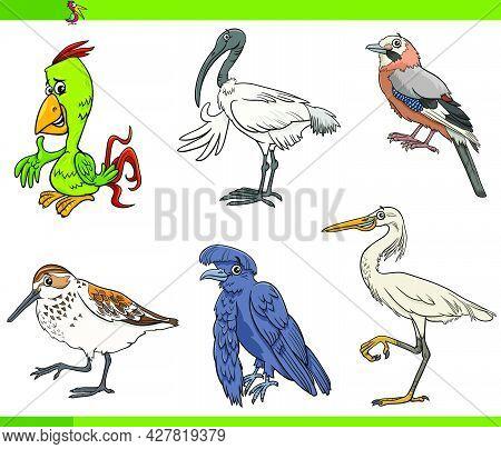 Cartoon Illustration Of Birds Animal Species Characters Set