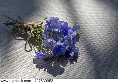 Small Bouquet Of Blooming Flax Lies On An Unpainted Linen Canvas. Lat. - Linum Usitatissimum. Theme:
