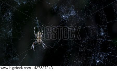 A Predatory Spider In Its Web Has Set Up An Ambush.backlit Cobweb.the Spider Spread Out The Morning