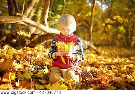 Little Boy Having Fun During Stroll In The Forest At Sunny Autumn Day. Child Playing Maple Leaves. A