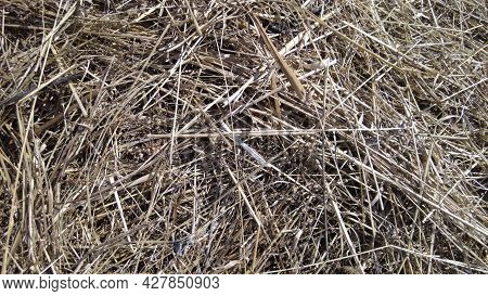 Background Farm, Texture Hay Or Straw Pale Yellow Color. Dry Wheat Pile. Dried Grass Backdrop.