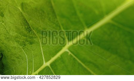 Green Leaf Close Up, Combination From Focus And Bokeh, Background. Macro Leaf. Blur Texture Foliage