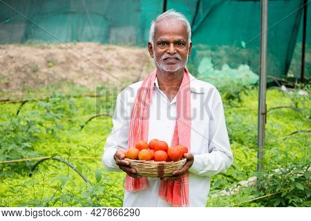 Happy Inidan Farmer Holding Fresh Farm Produce Tomatoes At Greenhouse Or Polyhouse And Looking At Ca