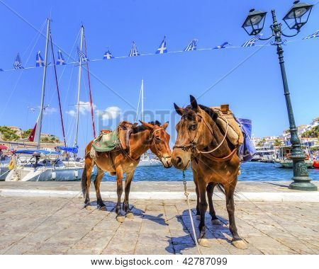 Donkeys On Greek Island