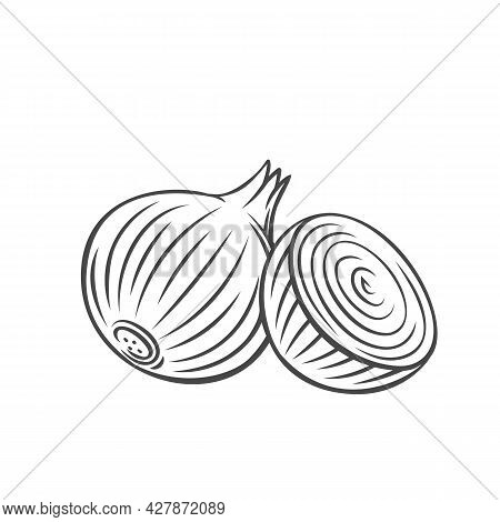 Onion Outline Icon. Vector Badge Vegetable In The Old Ink Style