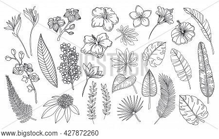 Line Art Tropical Leaves And Flowers. Outline Forest Palm Monstera Fern Hawaiian Leaves, Orchid, Hib