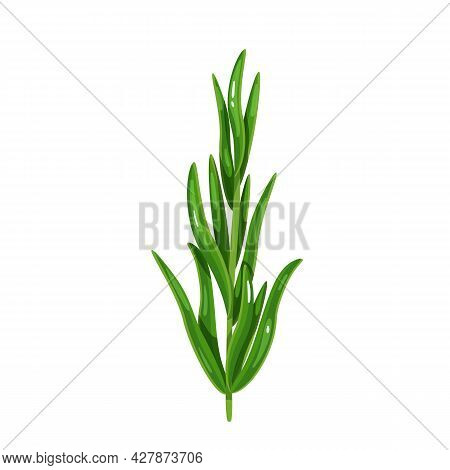 Green Tarragon, Vegetarian Food, Healthy Menu. Herbs , Salad And Meals. Isolated Vector Illustration
