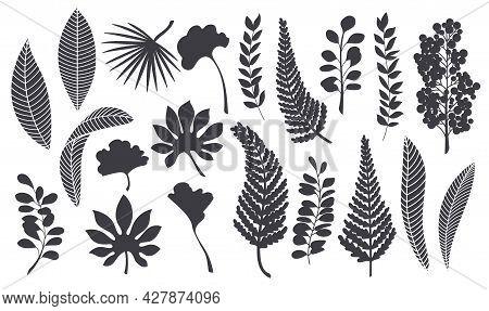 Silhouettes Tropical Leaves. Monochrome Glyph Forest Palm Ginkgo Biloba, Monstera, Cheflera, Zamiocu