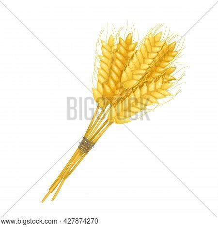 Sheaf Of Wheat Ears, Spikelets And Grains. Flour Production Or Beer Design. Vector Illustration.