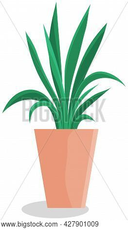 Long, Low Flowerpot With Small Green Herbaceous Plants. Young Green Grass In Pot. Indoor, Houseplant