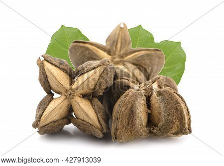 Nuts Incas , Sacha Inchi Peanut Seed An Isolated On White Background