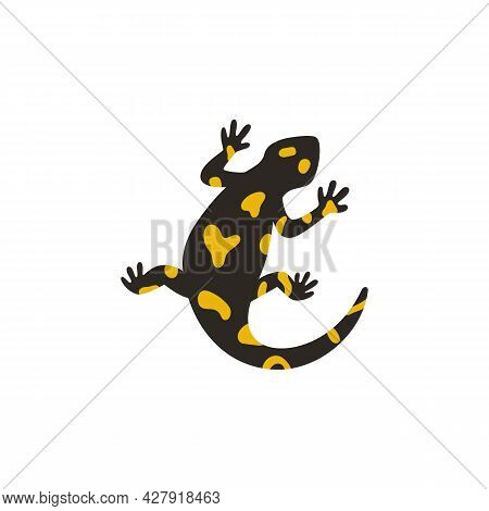 The European Fire Salamander Isolated On White Background. Vector Illustration Of Poisonous Black Am