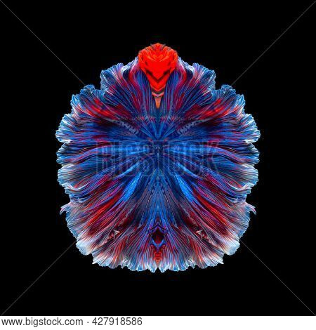 Abstract Art Of Siamese Fighting Fish Or Betta Fish Tails Symmetry Form Background