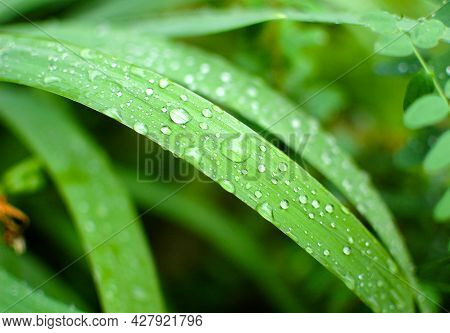 Green Grass After The Rain. Raindrops On The Grass. Grass Stalks After The Rain.