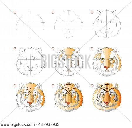 How To Learn To Draw Sketch Of Tiger Head. Creation Step By Step Watercolor Painting. Educational Pa